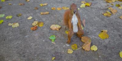 Squirrel Removal: Why They Need to Be Evicted From Your Home Fast, Daleville, Alabama