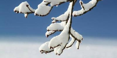 How to Trim a Frozen Tree: 3 Tips for Careful Cutting, Loveland, Ohio