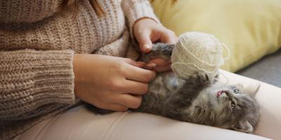What Pet Parents Want to Know About Spaying & Neutering , Elyria, Ohio