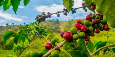 Tracing Coffee's Journey From Nature to Your Mug, Lakeville, Minnesota
