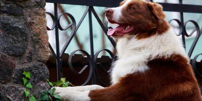 5 Tips for Choosing a Fence for Your Dog, Spencerport, New York