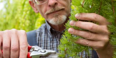 3 Essential Tree Care Tips for Summer, Springfield, Ohio