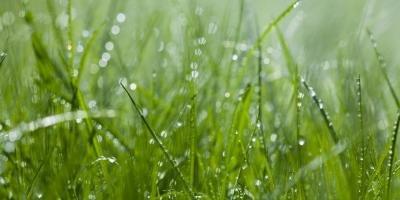 Don't Have a Sprinkler System? The Top 4 Negative Effects of Overwatering Your Property, Cincinnati, Ohio