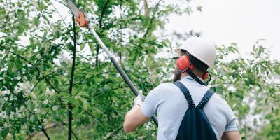 5 Reasons You Should Hire a Tree Trimming Service, St. Louis, Missouri