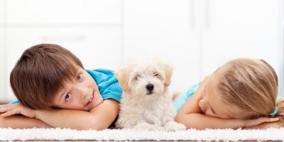 Carpet Cleaning Tips to Remove Pet Stains, Koolaupoko, Hawaii