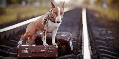 Storage Facility Explains How to Calm Your Pet During a Move, Lexington, South Carolina