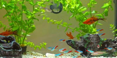 3 Tips for Keeping an Aquarium in a Storage Unit, ,