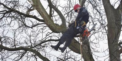 Storm Damage Cleanup Experts' Tips for Identifying Tree Damage, West Hartford, Connecticut