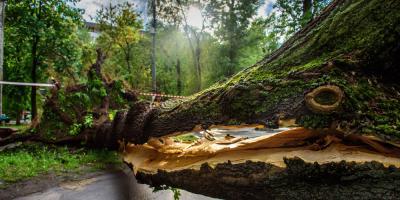 Storm Damage Repair Pros Share 3 Post-Storm Steps , Snow Hill, Missouri