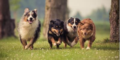 Top 3 Behavioral Benefits of Neutering YourDog, Stratford, Connecticut