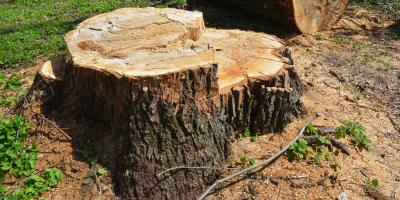 A Guide to Stump Grinding, Marshan, Minnesota