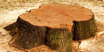 Stump Grinding or Removal: Which Is Right for You?, York, South Carolina