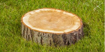 3 Reasons Why You Should Hire a Professional for Stump Removal, Anchorage, Alaska