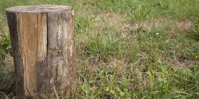 3 Reasons to Have a Professional Remove the Stump in Your Yard, Lincoln, Nebraska