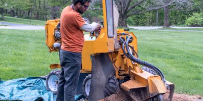 4 Reasons to Remove a Tree Stump, Dayton, Ohio