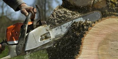 3 Reasons to Hire a Professional for Stump Removal, Cornwall, Connecticut