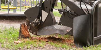 The Importance of Large Tree & Stump Removal Services, Summerdale, Alabama