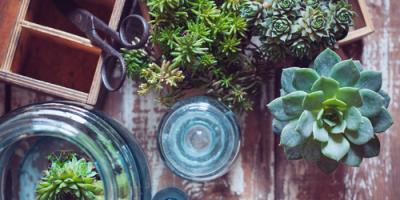 Garden Center Staff Shares 3 Winter Care Tips for Houseplants, Quaker City, Ohio