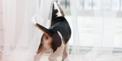 3 Ways to Make a Pet-Friendly Sunroom, East Rochester, New York