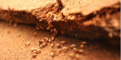 5 Key Ways to Prevent Termites, Trenton, Ohio