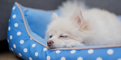 5 Tips for Residential Moving With Pets, Puyallup, Washington