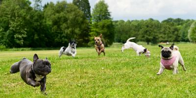 3 Ways Your Dog Will Benefit From Playing With Other Dogs, Tampa, Florida