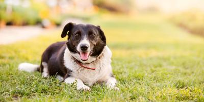 4 Pet Care Tips to Protect Your Dog This Summer, Russellville, Arkansas