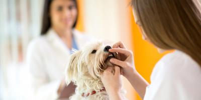 3 Reasons to Book an Appointment for Pet Dental Cleaning, Prairie du Chien, Wisconsin