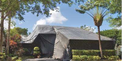 3 Interesting Facts About Termites, Wahiawa, Hawaii