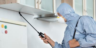 Top 3 Signs You Need a Termite Control Service, New Braunfels, Texas