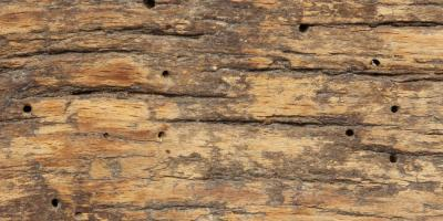 3 Telltale Signs You Have Termites in Your Home, North River, Virginia