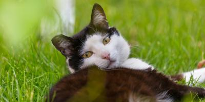 Veterinarian Offers 4 Tips to Keep Your Pets Safe in the Heat, Honolulu, Hawaii