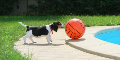 3 Pet Safety Tips for Homes With Swimming Pools, Troy, Missouri