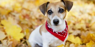 A Guide to Dogs & Leaf Allergies, Shelby, Wisconsin