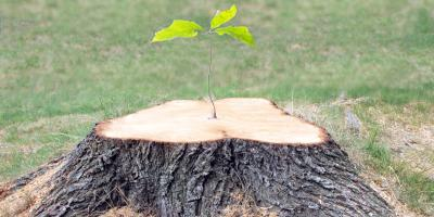 A Guide to Stump Grinding & Removal, Hopewell, Ohio