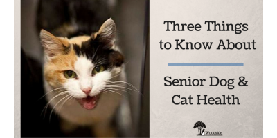 3 Things to Know About Senior Dog & Cat Health, Port Orchard, Washington