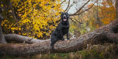 3 Tips to Prevent Ticks From Infesting Your Pets, Hilo, Hawaii