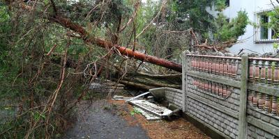 What Should You Do If a Tree Falls on Your Property? , Sparta, Georgia