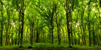 Which Timber Appraisal Method Is Most Accurate?, Camden, Arkansas