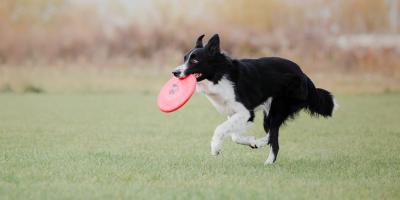 4 Tips for Getting Your Dog Enough Exercise , Lincoln, Nebraska