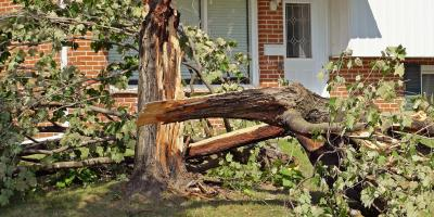 Tips for Disposing of Fallen Tree Branches, Chewelah, Washington