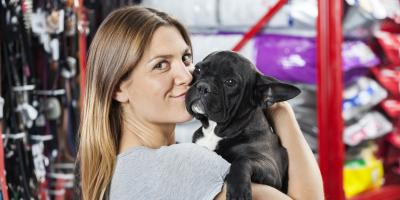 Top 3 Tips for Choosing the Perfect Pet for You, Conyers, Georgia