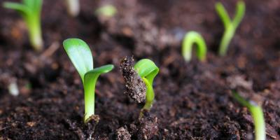 Topsoil Planning: How Much Do YouNeed for a One Acre Lot?, Victor, New York