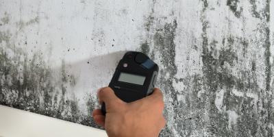 5 Signs of Toxic Mold, Reddick-McIntosh, Florida