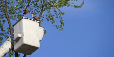 4 FAQ About Tree Removal, St. Louis, Missouri