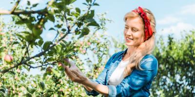 How to Ensure Your Apple Trees Thrive, Miamitown, Ohio