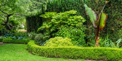 5 Low-Maintenance Shrubs & Bushes to Include in Your Landscaping, Lincoln, Nebraska