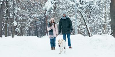 4 Winter Safety Tips for Pets, Lincoln, Nebraska