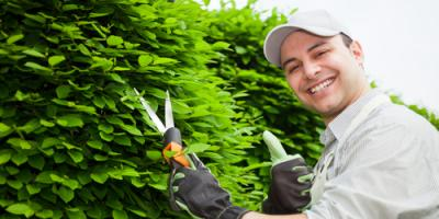 4 FAQs About Pre-Spring Tree Care, Macedon, New York