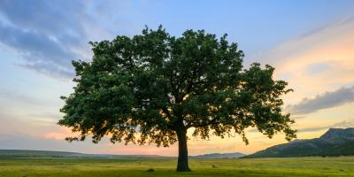 How One Tree Can Serve as an Entire Ecosystem, Milford, Ohio